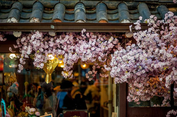 Blossoms and shops in South Korea