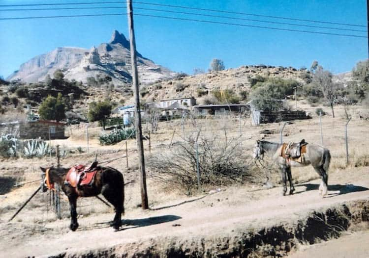 African adventure Horses tethered at the side of the road. Horses and donkeys are a popular form of transport