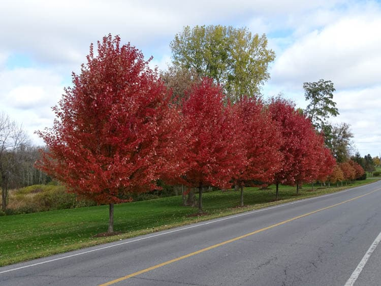 Fall Colours in Ontario Rednersville Road