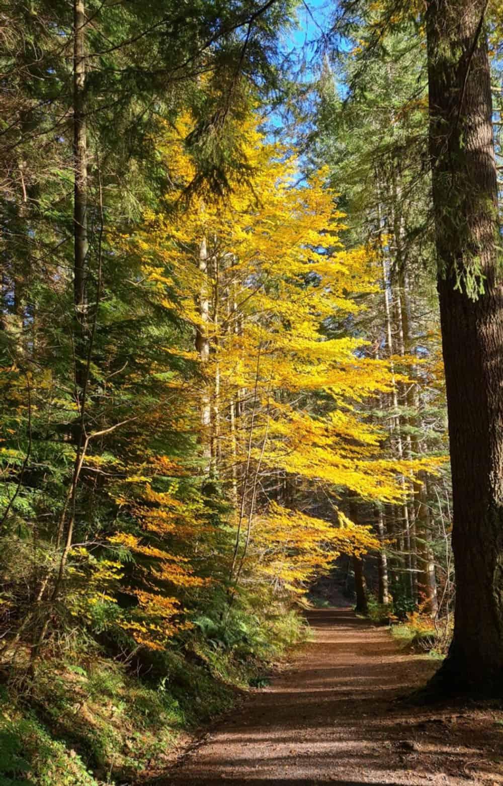 Pertshire Scotland in autumn