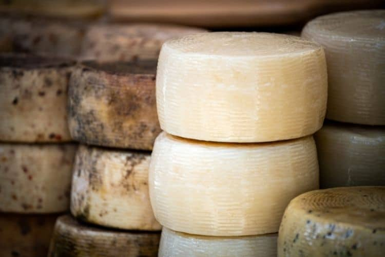 Studying abroad Pecorino cheese wheels