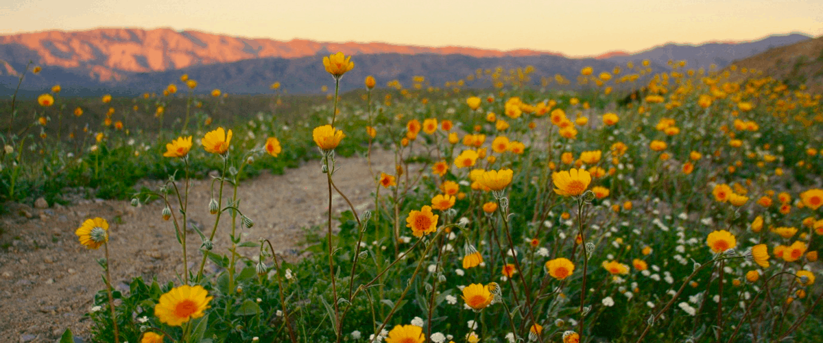 The beautiful desert in Palm Springs California