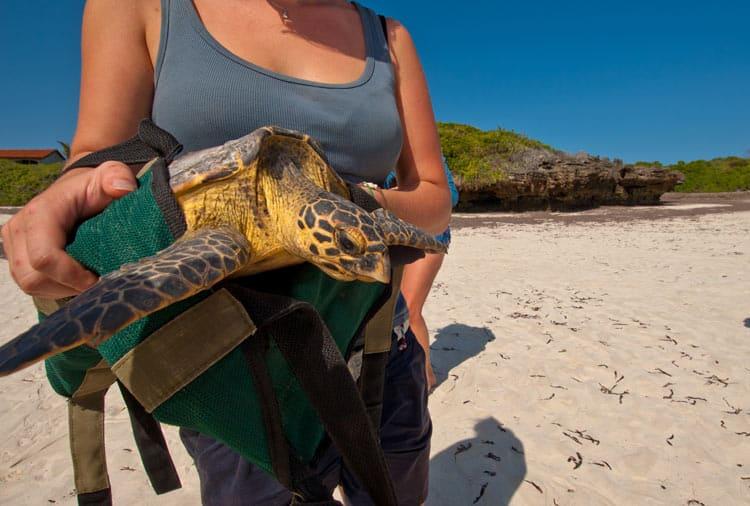 Volunteer with wildlife in Costa Rica